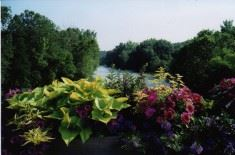 green leaves and pink flowers in front of a river